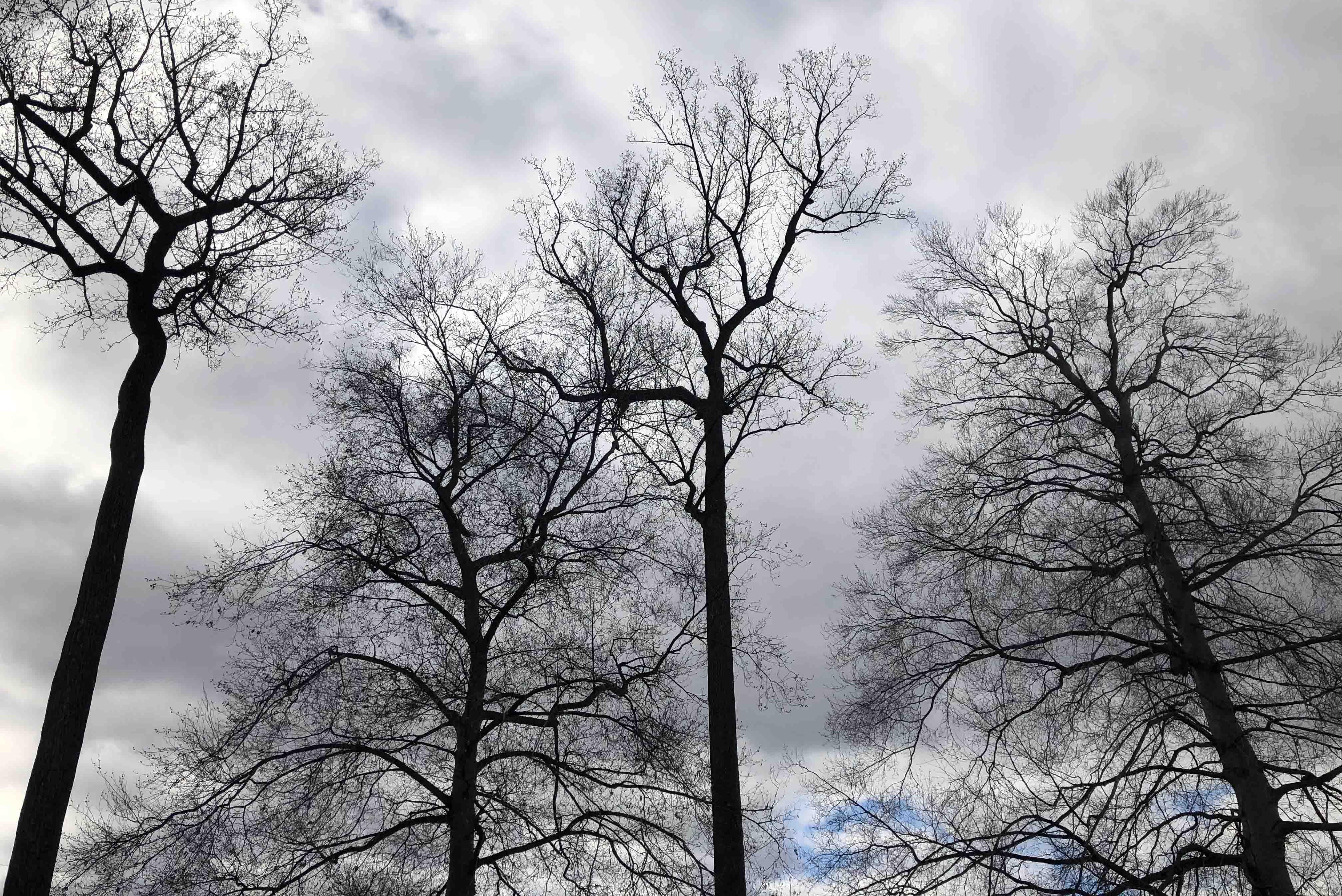 Image of trees on campus against a cloudy sky.