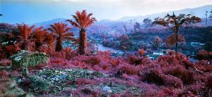 Hombo, Walkable (2012). © Richard Mosse. Courtesy of the artist and Jack Shainman Gallery, New York.