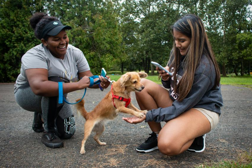 Students volunteer at a dog rescue