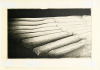 Pati Hill collection, scan of swan wing